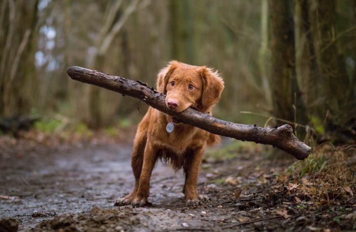 Pebblebed Heaths dog walker code of conduct