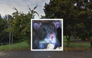 Land of Canaan rats: pest control have been called in