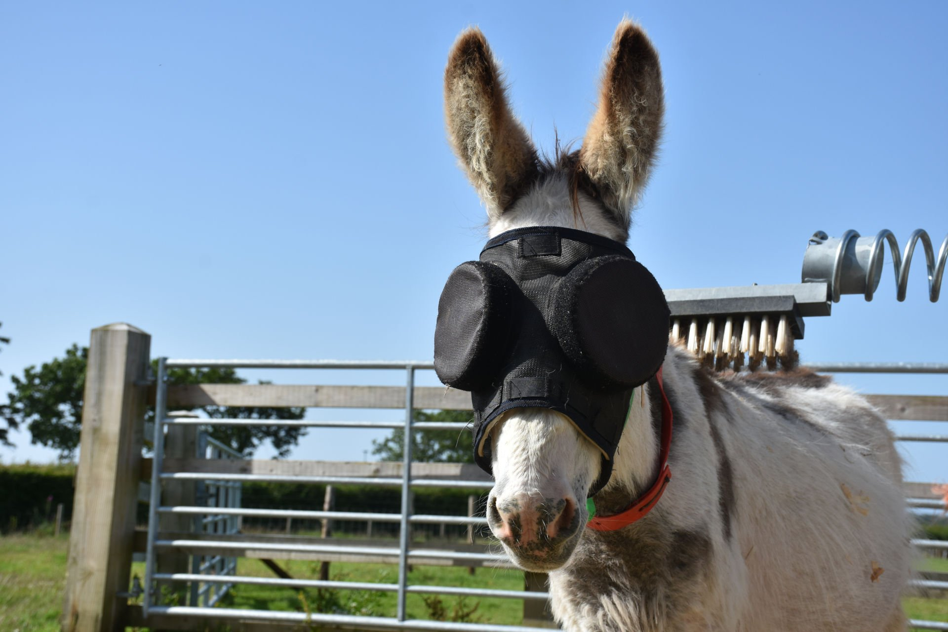 Jonty is pictured sporting his eye-catching sunglasses in Sidmouth. Picture: The Donkey Sanctuary