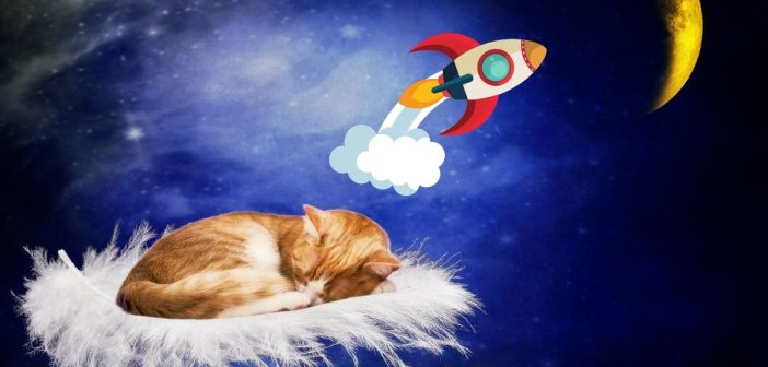 Space Cats are coming to Honiton