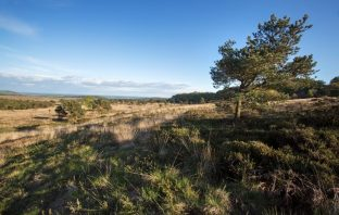 Woodbury Common East Devon