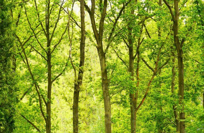 Forest for Devon