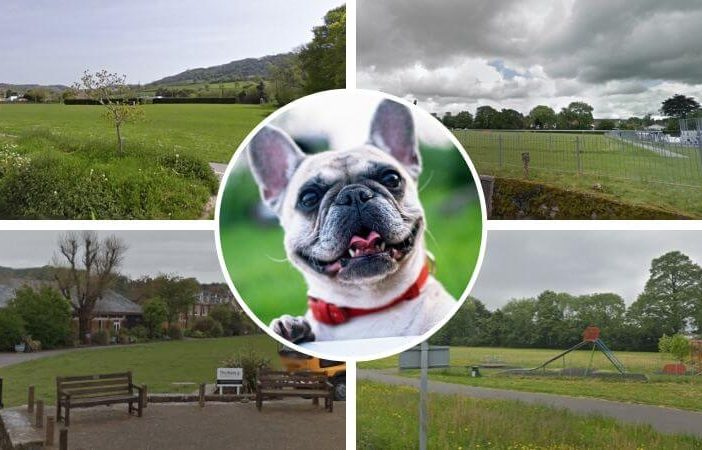 Clockwise - Sidford Playing Fields; Manstone Recreation Field; Long Park; The Ham. Sidmouth Town Council says dogs should be banned from all land used for recreation and sport. Pictures: Google Maps