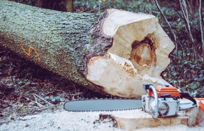 tree fell