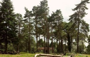 Stock photo of Haldon Forest and the Bullers Hill picnic area: Image: Geograph