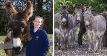 Sidmouth donkey sanctuary donates surplus PPE equipment to frontline NHS staff