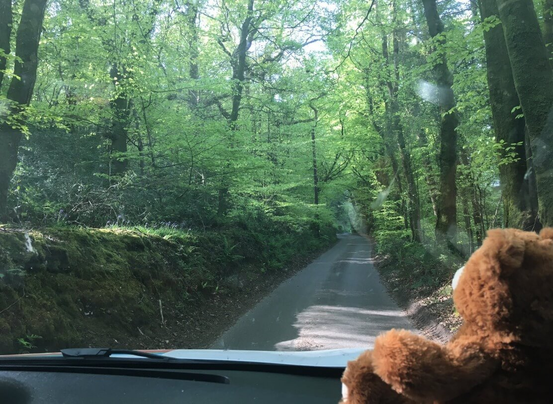 Ted the bear has been helping East Devon District Council's beach officer carry out patrols and checks. Photo: EDDC