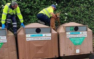 Refuse workers rescued the trapped deer in Cowick Lane. Photo: Exeter City Council