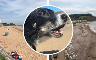 Exmouth and Sidmouth beaches are among those in East Devon effected by the dog ban.