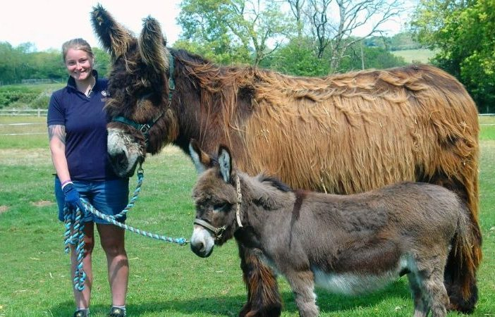Sidmouth: Groom Rachel Hill is pictured with two of the donkeys. Picture: The Donkey Sanctuary