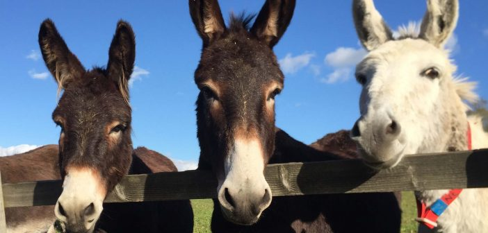 The Donkey Sanctuary in Sidmouth to remain temporarily shut to visitors