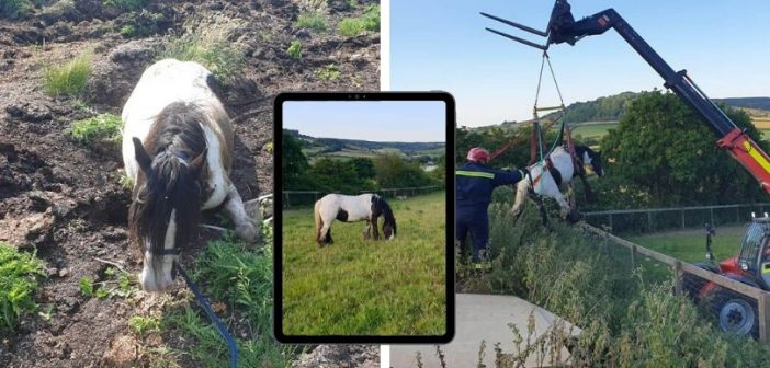PHOTOS: Owner praises Exmouth and Seaton firefighters for saving trapped horse's life