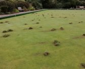 Police appeal for information after youths throw turf onto bowling green at Honiton