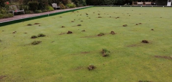Turf-throwing 'mindless youths' cost Honiton Bowling Club two hours of clean-up time