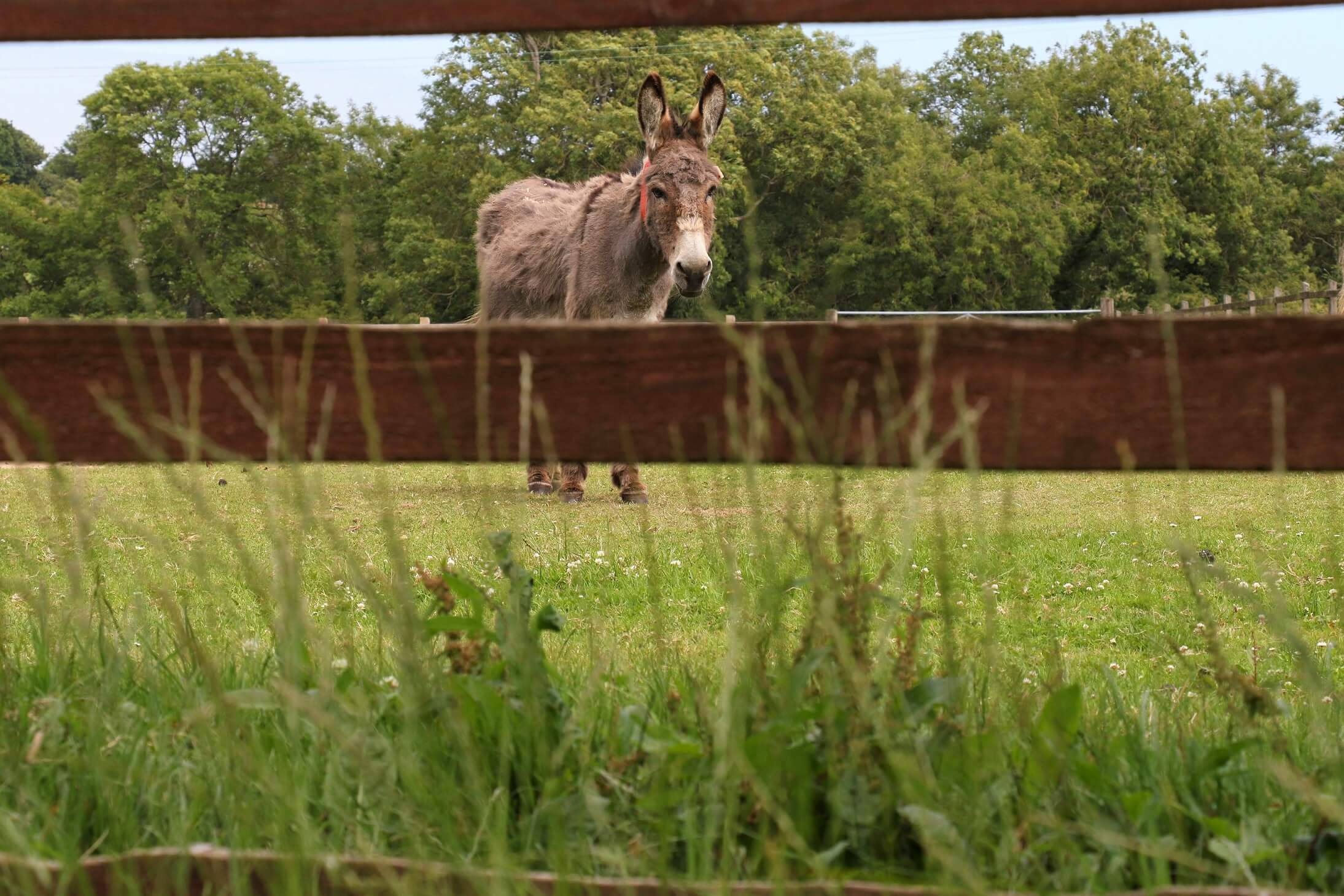 Pictures: The Donkey Sanctuary Sidmouth