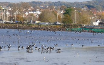 The Duckpond on the Exe Estuary in Exmouth.