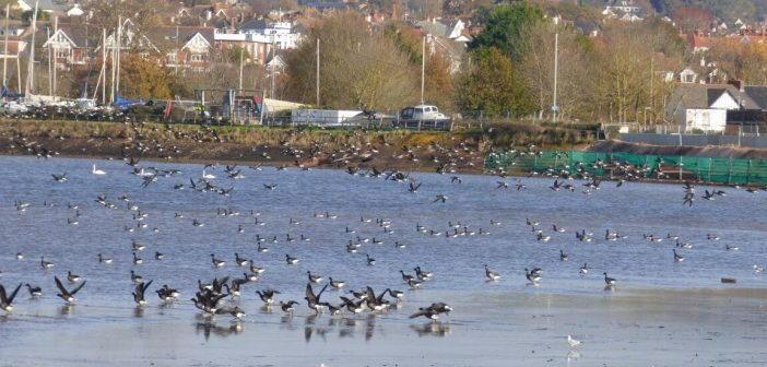 'Pick up one item' plea to Exe Estuary users as Covid rule of six scuppers annual autumn clean-up