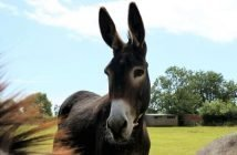 The Donkey Sanctuary in Sidmouth has reopened to the public after Covid restrictions forced its closure.