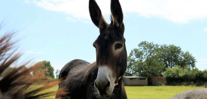 The Donkey Sanctuary in Sidmouth reopens to visitors after six months
