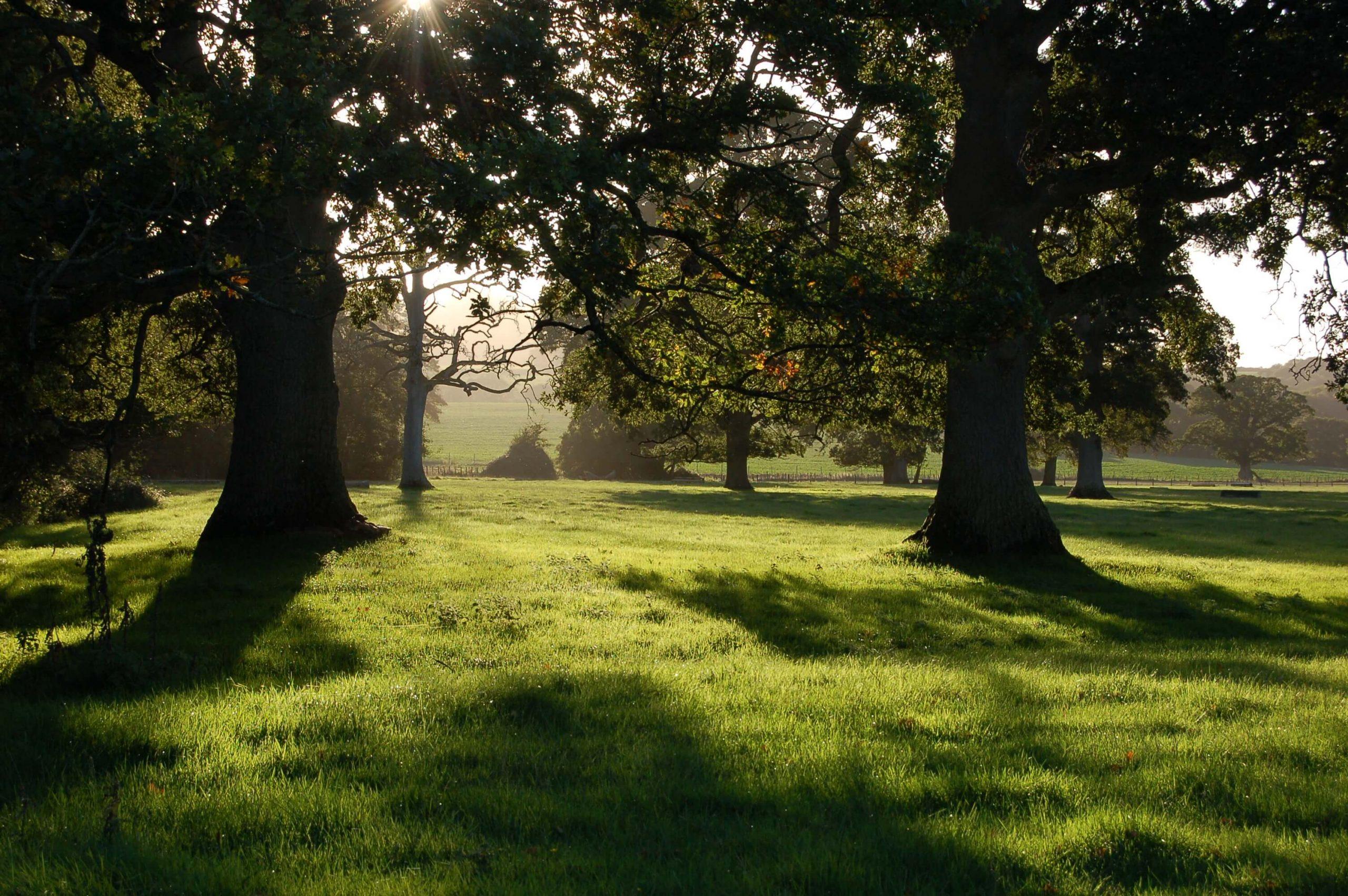 Poltimore Park in East Devon. Picture: Simon Bates