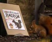 Radish the red squirrel 'retires' from East Devon wildlife haven after cute critter's breeding efforts help in fight to save species