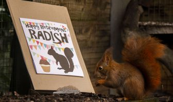East Devon Ottery St Mary Staff made Radish the red squirrel a card to wish him a happy retirement. Picture: Wildwood Escot
