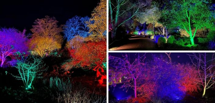 Alive with lights: New family festive fun coming to Sidmouth Connaught Gardens