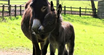 PHOTOS: The Donkey Sanctuary near Sidmouth welcomes first foal of the year