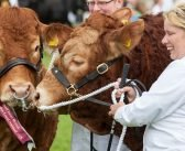 Tickets go on sale for 2021 Devon County Show after 'overwhelming' public support for event