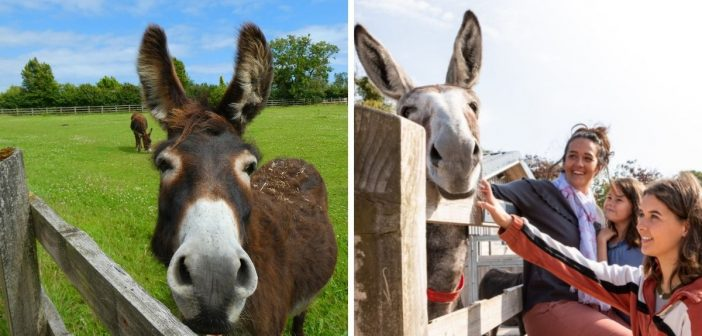 Countdown starts as The Donkey Sanctuary at Sidmouth is days away from reopening