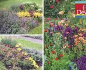 District council ditches seasonal displays in favour of permanent plants and flowers in East Devon parks and gardens