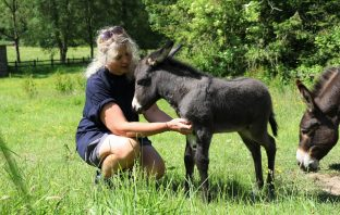 Groom Lisa Coles with the new foal at The Donkey Sanctuary near Sidmouth. Image: The Donkey Sanctuary