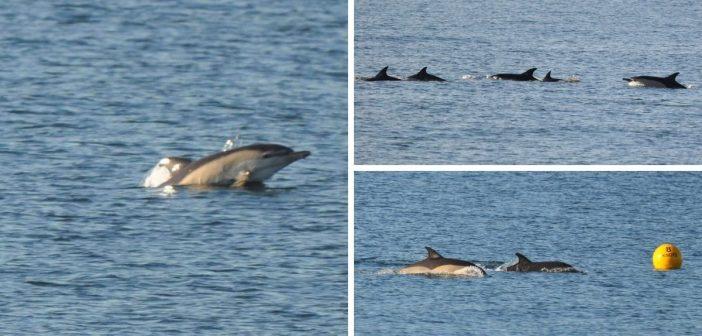 PHOTOS: Scuba diver spots 'magical' dolphin pod off Budleigh Salterton